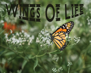 Wings of Life Album